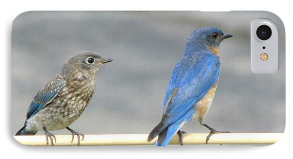 Male And Female Bluebirds On A Perch IPhone Case by Betty Pieper