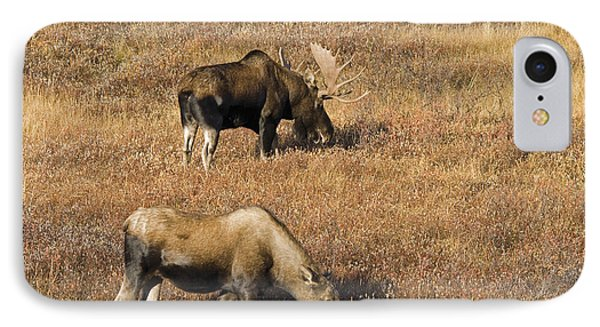 Male And Female Moose Alces Alces In Phone Case by Philippe Widling