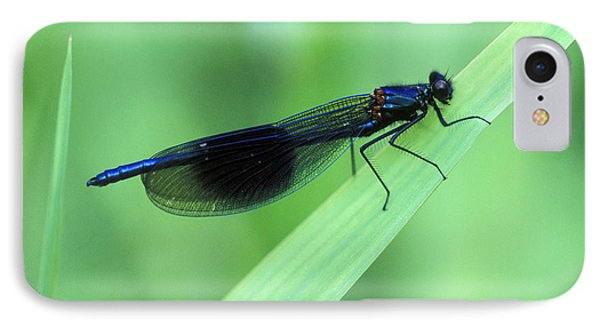 Male Banded Damselfly Phone Case by Dr Keith Wheeler