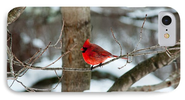 Male Cardinal In Winter Phone Case by Ron Smith