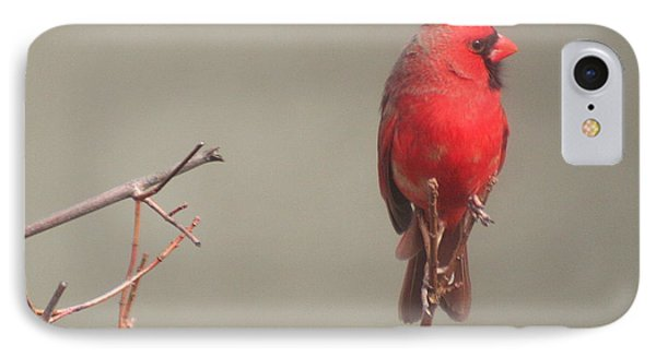 IPhone Case featuring the photograph Male Cardinal On A Branch by Laurel Talabere