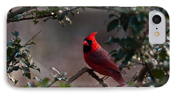 Male Cardinal Phone Case by Ron Smith