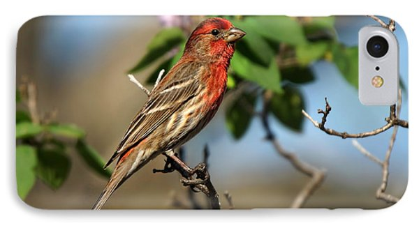 Male Finch Phone Case by Alan Hutchins