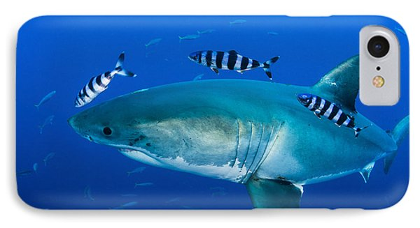 Male Great White Shark And Pilot Fish Phone Case by Todd Winner