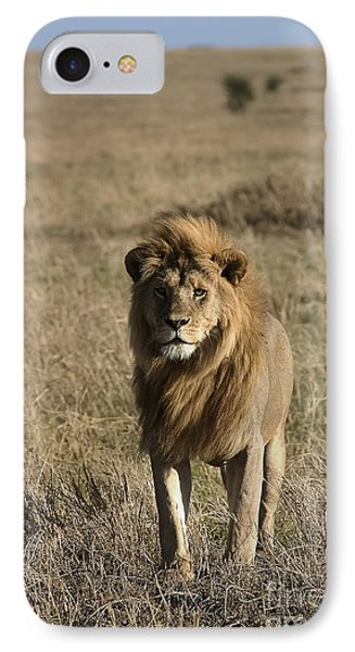 Male Lion's Gaze IPhone Case by Darcy Michaelchuk
