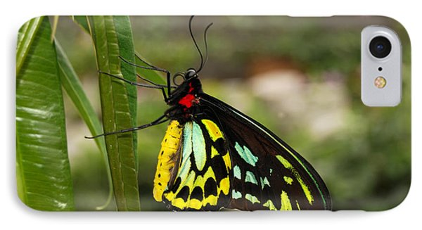 IPhone Case featuring the photograph Male New Guinea Birdwing Butterfly by Eva Kaufman