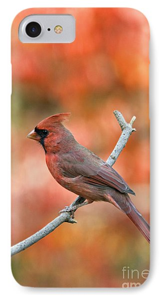 Male Northern Cardinal - D007810 Phone Case by Daniel Dempster