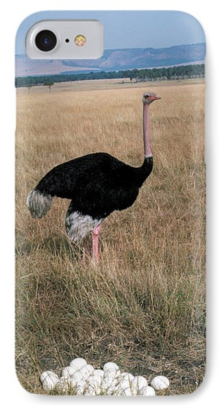 Male Ostrich With Eggs Phone Case by Carl Purcell
