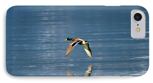 IPhone Case featuring the photograph Mallard Drake. by Mitch Shindelbower
