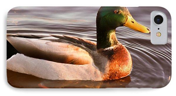 Mallard Duck At Sunset IPhone Case by Ann Murphy