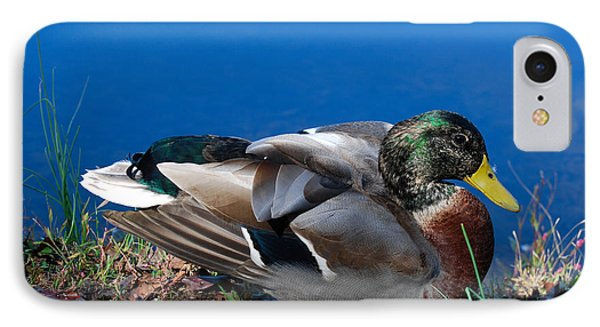 IPhone Case featuring the photograph Mallard On River Bank by Eva Kaufman