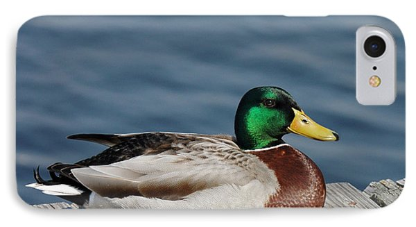 Mallard Profile IPhone Case by Sami Martin