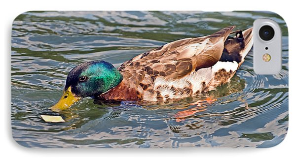 Mallard With Cracker Phone Case by Susan Leggett