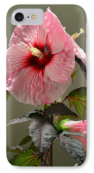 Mallow Hibiscus Phone Case by Sandi OReilly