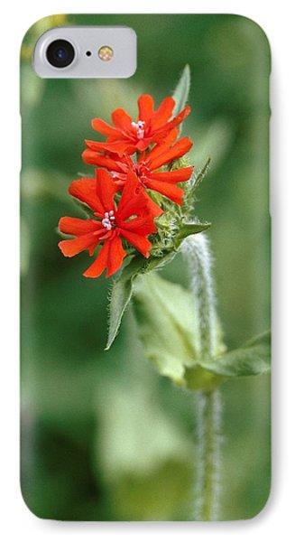 Maltese Cross (lychnis Chalcedonica) Phone Case by Vaughan Fleming