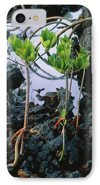 Mangrove Trees IPhone Case