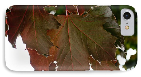 IPhone Case featuring the photograph Maple 2 by Tikvah's Hope