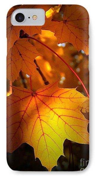 Maple At First Light IPhone Case by Sue Stefanowicz