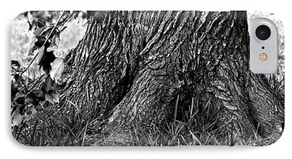 IPhone Case featuring the photograph Maple by Dan Wells