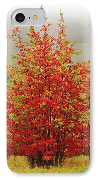 Maples In The Mist Phone Case by Roupen  Baker