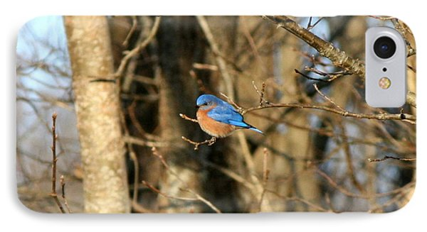 March Bluebird Phone Case by Neal Eslinger