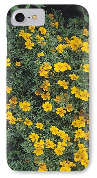 Marigolds (tagetes 'tangerine Gem') Phone Case by Adrian Thomas
