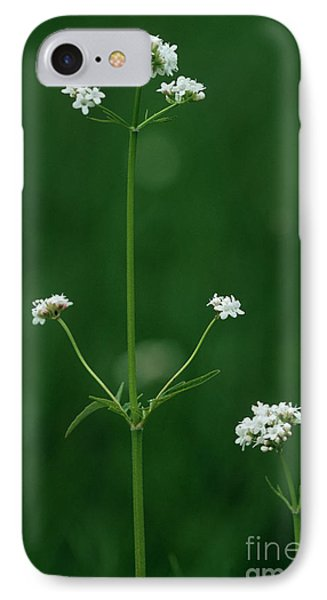 Marsh Valerian Flowers (valerian Dioica) Phone Case by Bob Gibbons