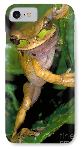 Masked Treefrog Phone Case by Gregory G. Dimijian