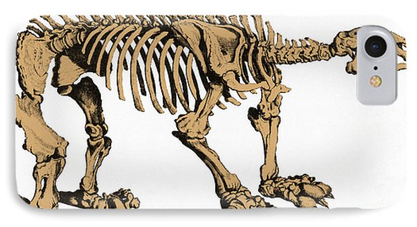 Megatherium, Extinct Ground Sloth Phone Case by Science Source