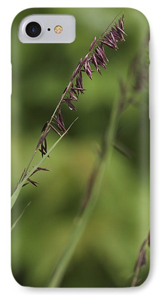 Melica IPhone Case by Trevor Chriss