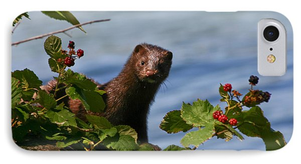 IPhone Case featuring the photograph Mink In Blackberries. by Mitch Shindelbower