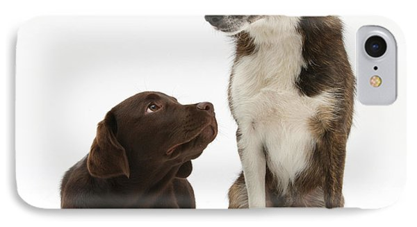 Mixed Breed And Chocolate Lab IPhone Case