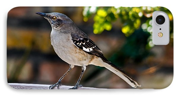 Mocking Bird IPhone Case by Robert Bales