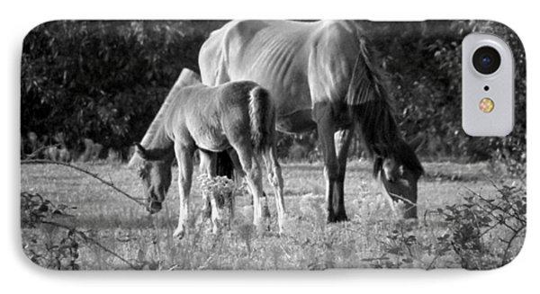 Mom And Foal Grazing At Sunset Phone Case by Kim Galluzzo Wozniak
