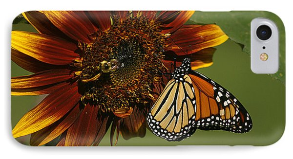 Monarch And The Bee IPhone Case