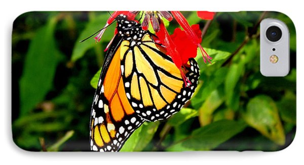 IPhone Case featuring the photograph Monarch Butterfly On Red Flowers by Jodi Terracina