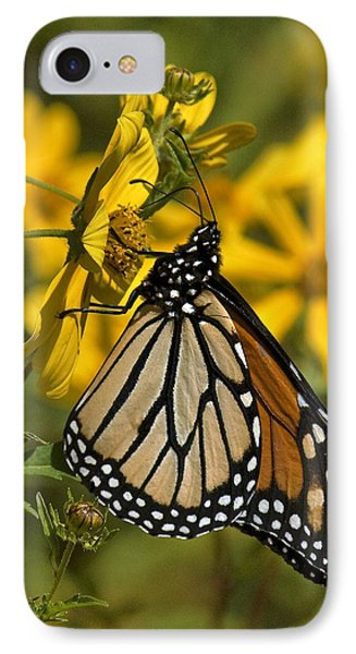 IPhone Case featuring the photograph Monarch Butterfly On Tickseed Sunflower Din146 by Gerry Gantt