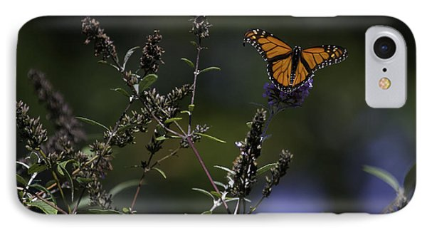Monarch In Morning Light Phone Case by Rob Travis