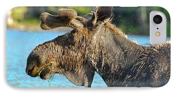 Moose Flies Phone Case by Lyn Scott