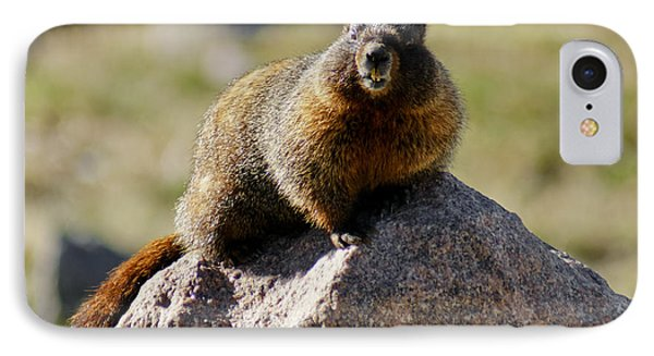 Morning Marmot IPhone Case by Colleen Coccia