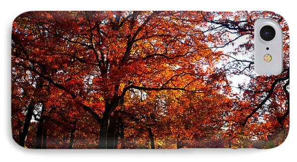 Morton Arboretum In Colorful Fall Phone Case by Paul Ge