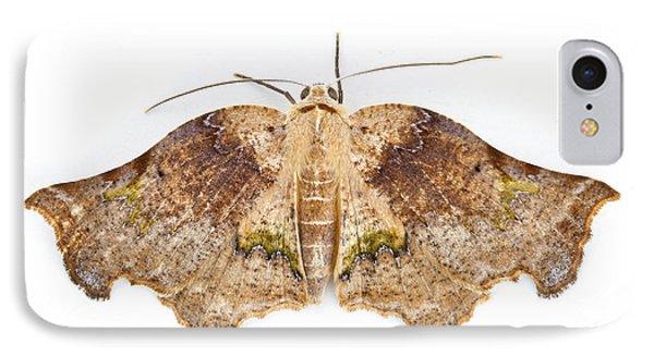 Moth Braulio Carrillo Np Costa Rica Phone Case by Piotr Naskrecki