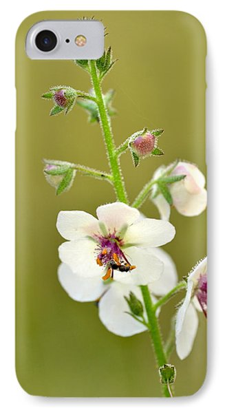 IPhone Case featuring the photograph Moth Mullein by JD Grimes