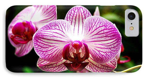 IPhone Case featuring the photograph Moth Orchid by Pravine Chester
