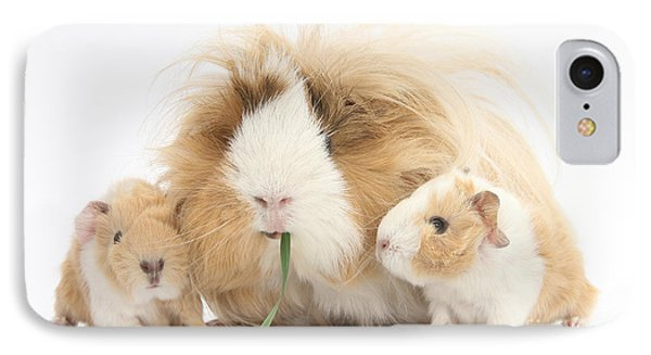 Mother Guinea Pig And Baby Guinea Phone Case by Mark Taylor