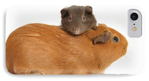 Mother Guinea Pig With Baby Guinea Pig Phone Case by Mark Taylor