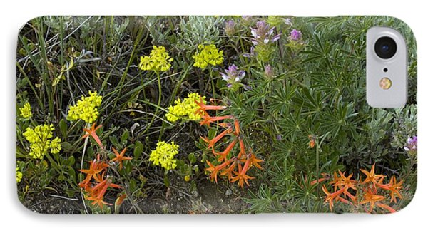 Mountain Flowers, Usa IPhone Case by Bob Gibbons