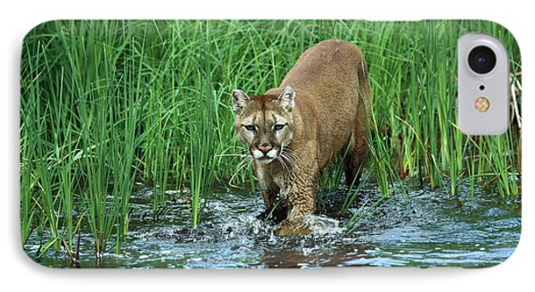 Mountain Lion Puma Concolor Wading Phone Case by Konrad Wothe
