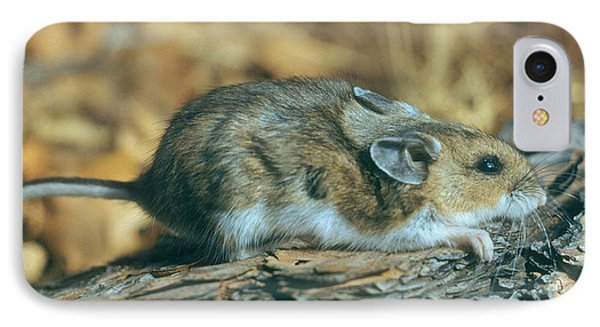 Mouse On A Log Phone Case by Photo Researchers, Inc.