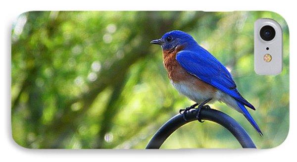 Mr Bluebird IPhone Case by Judy Wanamaker